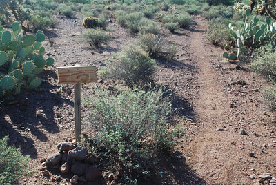 Y section in the Trail Stay on Cougar to do the Loop, But 2GM (to Gila Monster) is a fun trail for a later date.