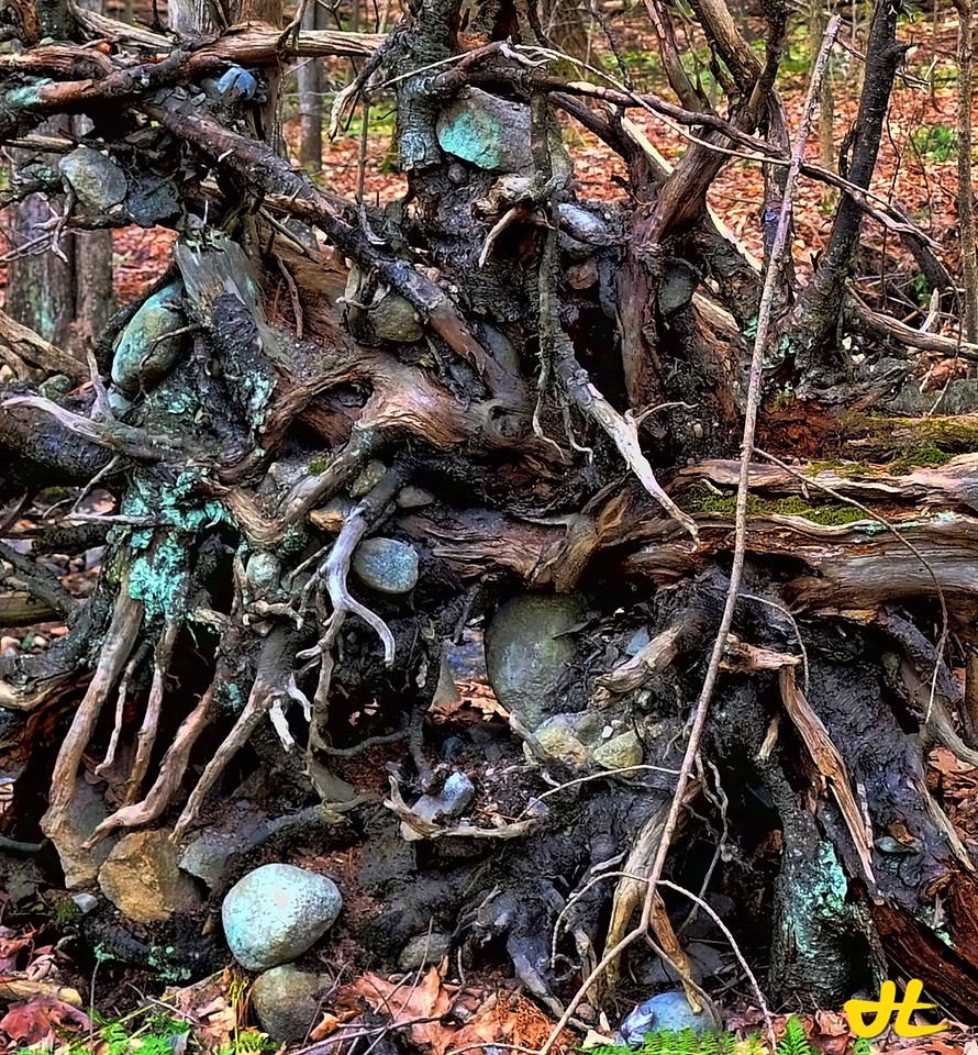 We never realize the power in the roots of a tree until nature shows us one by accident, revealing the collection of stones and dirt that are normally hidden from our view...