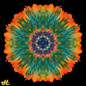 JE8_9873-Edit-orb7