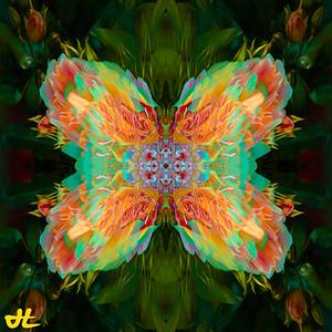 JR8_6542-Edit-smplf-mprsn-orb7