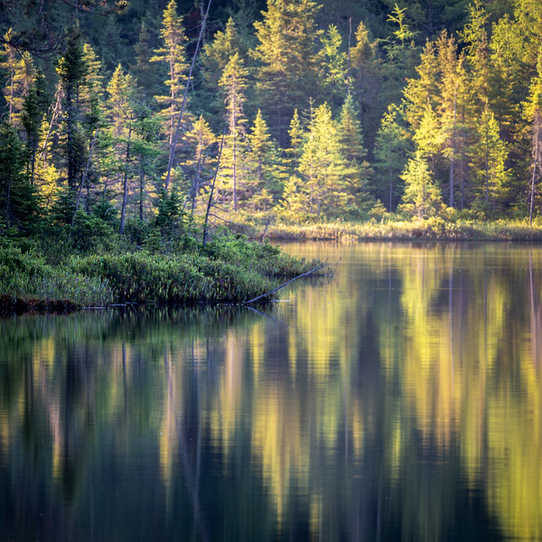 Blueberry Lake evening light