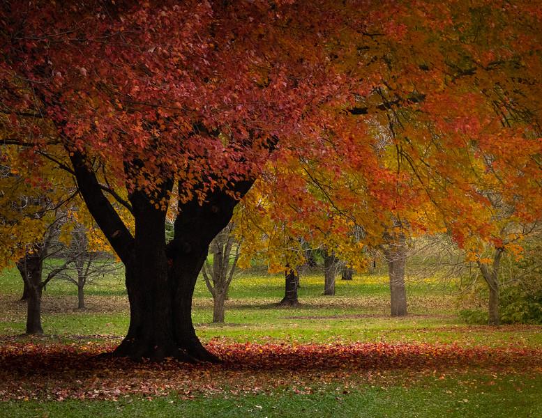 UW Arboretum, Madison WI
