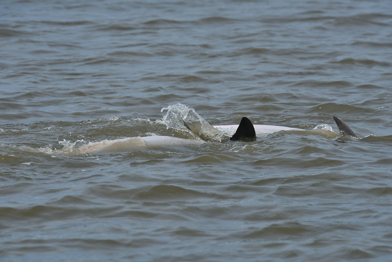 Jekyll Island Boat Tours  Dolphin Family Planning 07-26-18