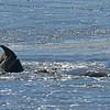 Jekyll Island Boat Tours  Dolphin Daze Z31 Mudding 08-07-18