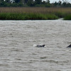 Jekyll Island Boat Tours Dolphin Passing Dock 05-12-19