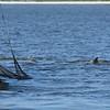 Jekyll Island Boat Tours Dolphin 07-10-20