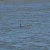 Jekyll Island Boat Tours Dolphin Tour 03-29-18