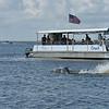 Jekyll Island Boat Tours Dolphin Daze Dolphin 07-04-20
