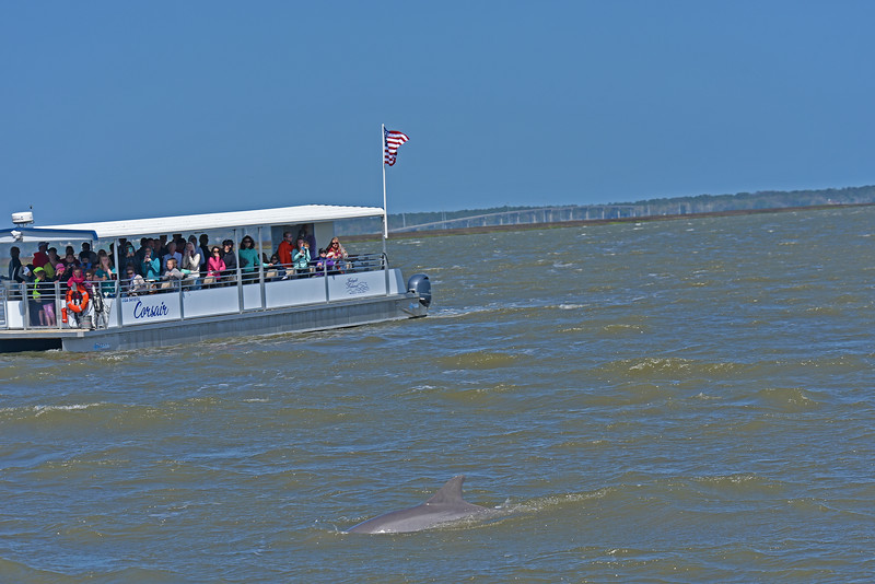 Jekyll Island Boat Tours Dolphin Tour 04-05-18