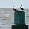 Jekyll Island Boat Tours Dolphin 05-02-19