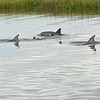 Jekyll Island Boat Tours - Dolphin Daze Private Tour 05-03-19