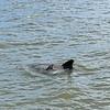 Jekyll Island Boat Tours - Dolphin 05-04-19