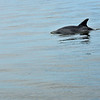 Jekyll Island Boat Tours - Dolphin Daze Private Tour 05-06-19