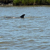Jekyll Island Boat Tours 05-07-19