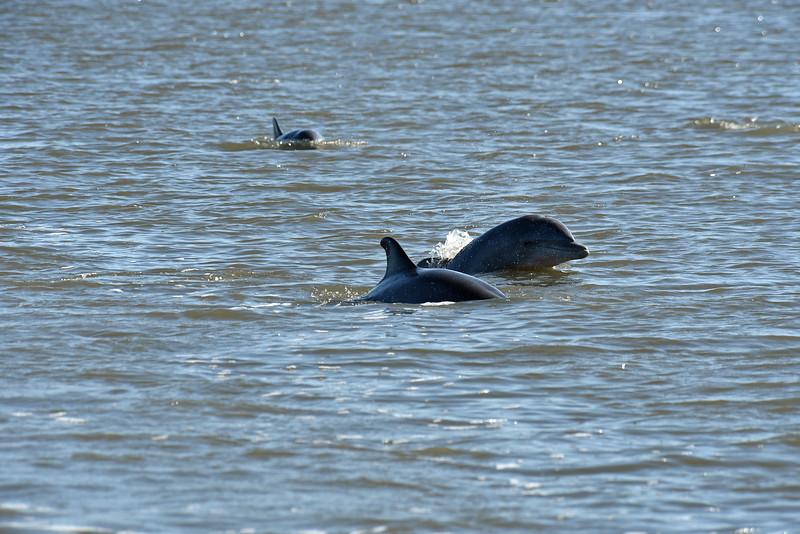 Jekyll Island Boat Tours Dolphin  Eco Tour 05-14-19