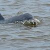 Dolphin Tour - Jekyll Island Boat Tours 06-17-18