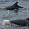 Dolphin Tour - Jekyll Island Boat Tours 07-11-18