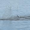 Dolphin Tour - Jekyll Island Boat Tours 07-15-18