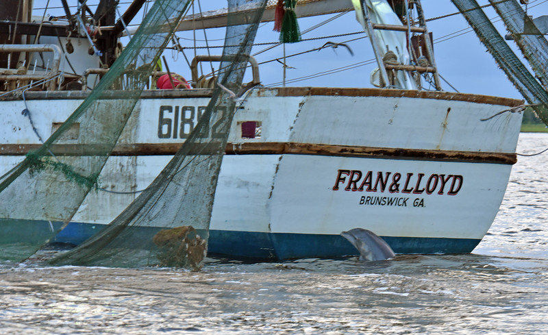 Jekyll Island Boat Tours  Dolphin St. Andrews Sound 08-06-18