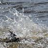 Jekyll Island Boat Tours Dolphin 09-30-18