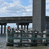 Jekyll Island Boat Tours Bridge Fender 04-24-18