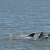 Jekyll Island Boat Tours Dolphin Tour - with Baby 05-04-18