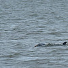 Jekyll Island Boat Tours Dolphin Tour - with Baby 05-15-18