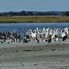 Jekyll Island Boat Tours Birding Expedition 10-14-19