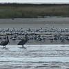 Birding-f7975