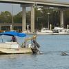 Dolphin Tour - Jekyll Island Boat Tours - Ronnie Barwick - 02-10-18