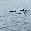 Jekyll Island Boat Tours Dolphin  04-10-19
