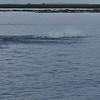 Dolphin-f2404