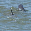 Dolphin Tour - Jekyll Island Boat Tours 04-12-18