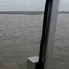 Jekyll Island Dolphin Tours Video 04-14-19