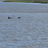 Jekyll Island Boat Tours Dolphin Tour - with Baby 04-19-18