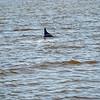 Jekyll Island Boat Tours - Dolphin 05-03-21