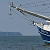 Jekyll Island Boat Tours Dolphin 06-02-19