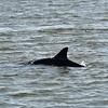 Jekyll Island Boat Tours - Dolphin 06-02-20