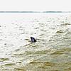 Jekyll Island Boat Tours Dolphin Daze Dolphin 06-03-20