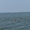 Dolphin-f4581-O