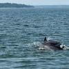 Jekyll Island Boat Tours Dolphin 06-04-19