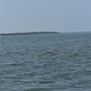 Dolphin-f4588-O