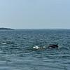 Dolphin-f4558