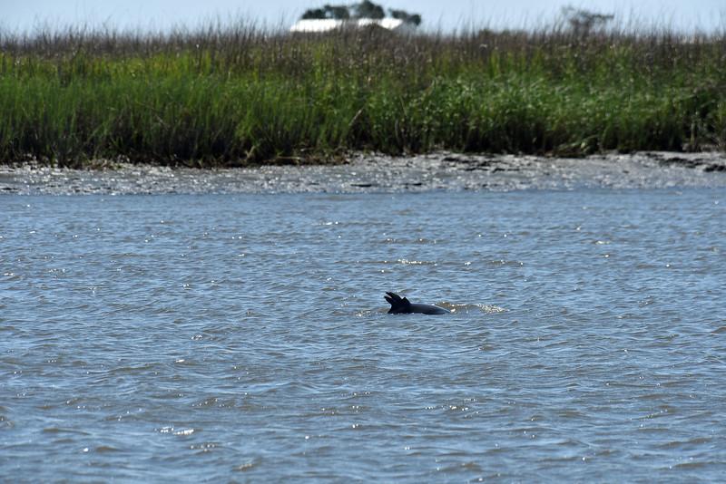 Jekyll Island Boat Tours Dolphin 06-14-19