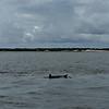 Dolphin-f4801