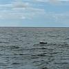 Dolphin-f4802