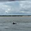 Dolphin-f4800