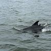 Jekyll Island Boat Tours Dolphin 06-16-19