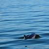 Jekyll Island Boat Tours Dolphin Alligator 06-18-19