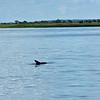 Dolphin-f5030